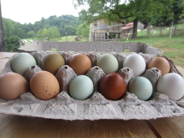 Pullet Eggs and Parlor